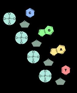 nucleotidi-2