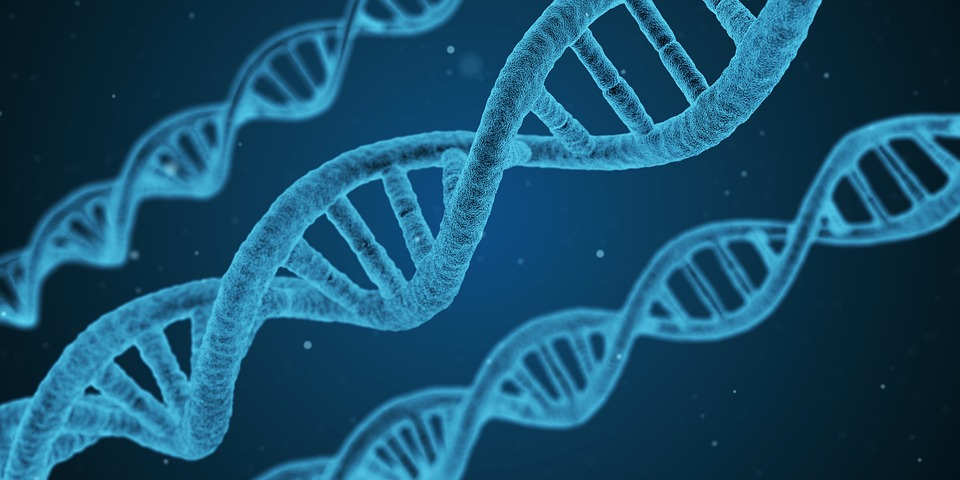 sindrome di down: DNA