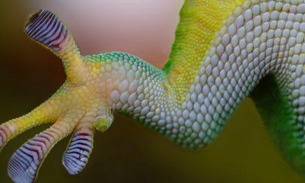 Nanotecnologie: ispirate dalla natura, al servizio dell'uomo