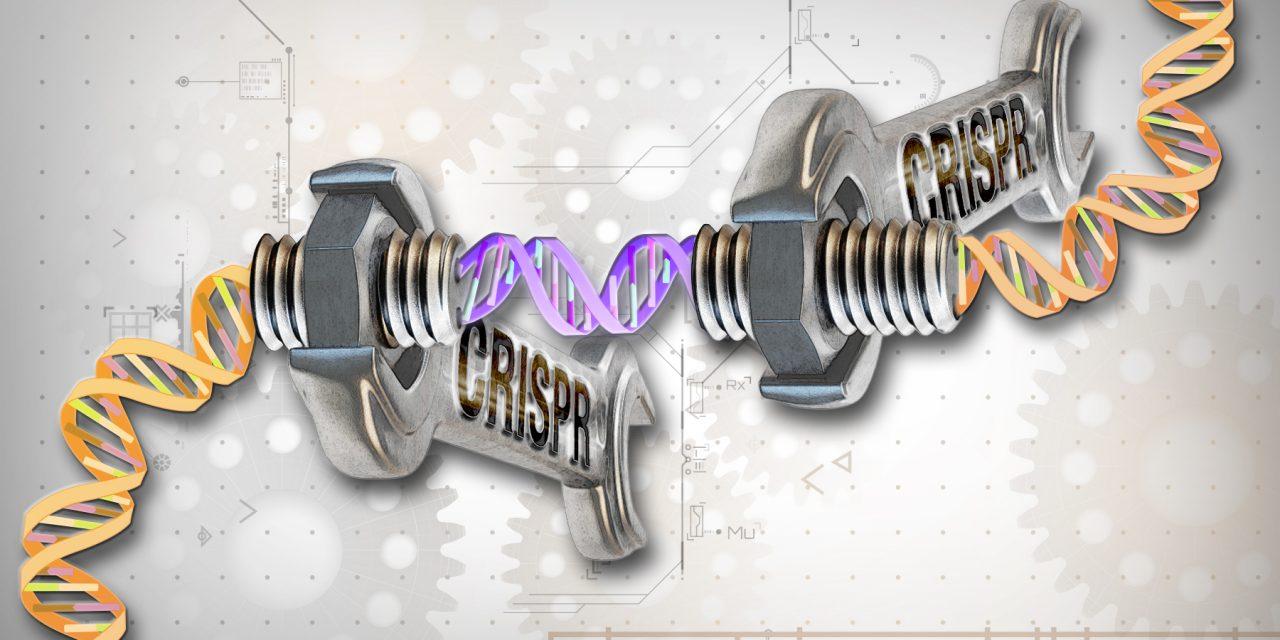 IL TAGLIA E CUCI DELLA GENETICA
