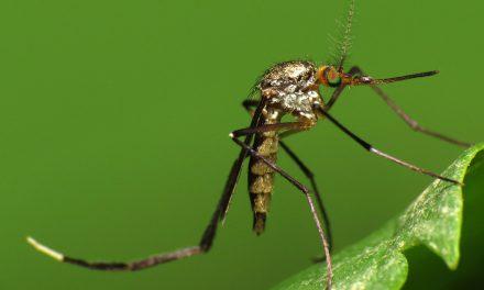 Al via in USA la sperimentazione clinica del vaccino anti Zika